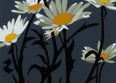 daisy on grey