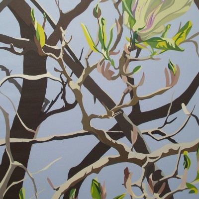 Spring - grey green Magnolia, first new leaves and bare branches