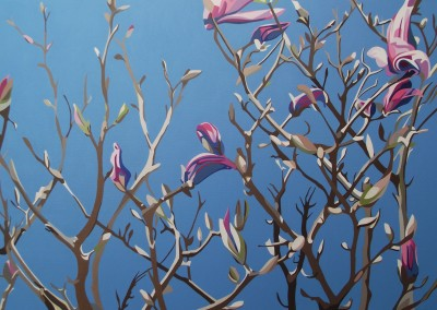 Spring - Purple magnolia, bare branches and cold blue spring sky