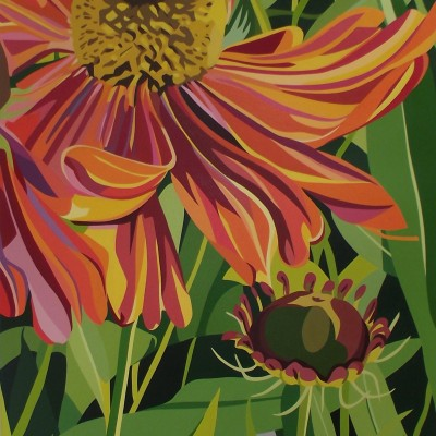 Summer - Orange dancing daisy on a Summers day