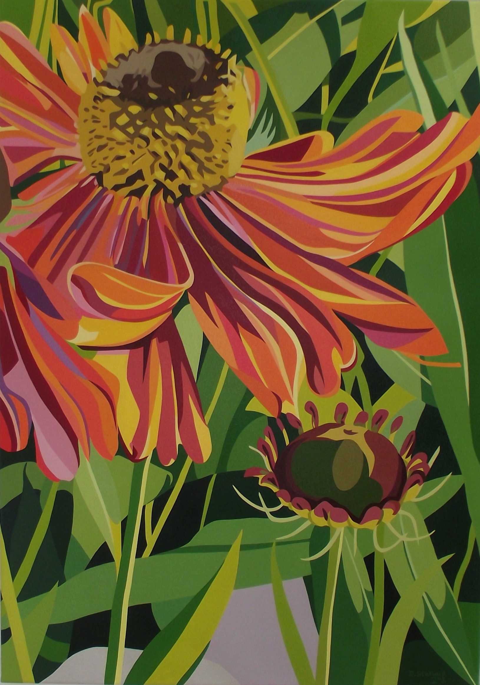 Summer orange dancing daisy on a summers day dan stallard summer orange dancing daisy on a summers day izmirmasajfo